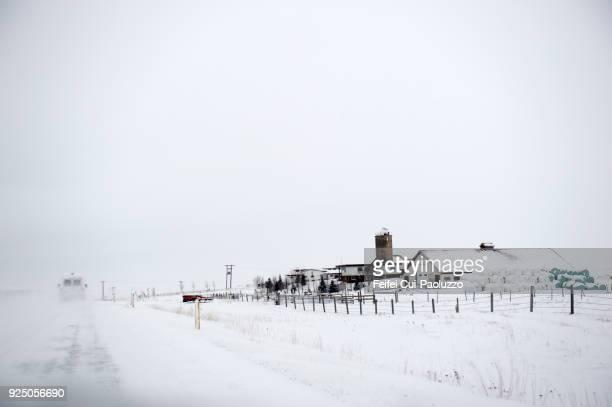 farmhouse near selfoss, iceland - selfoss stock photos and pictures