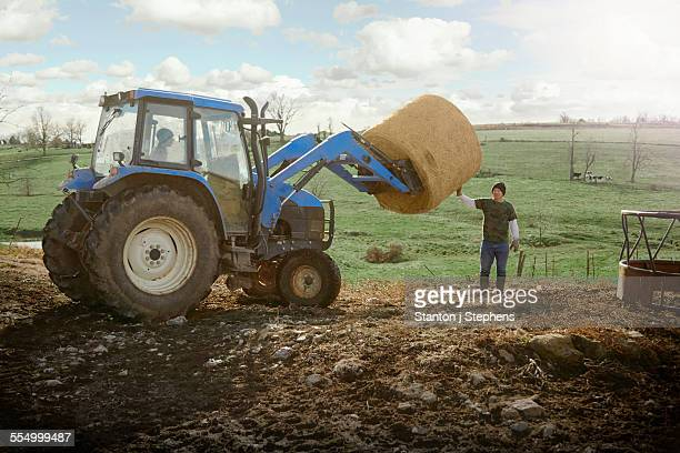 Farming brothers driving tractor moving hay stack on dairy farm