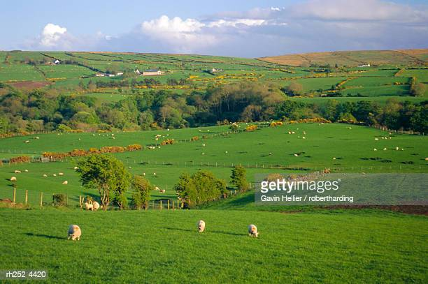 farming countryside, county antrim, ulster, northern ireland, uk, europe - gavin hellier stock pictures, royalty-free photos & images