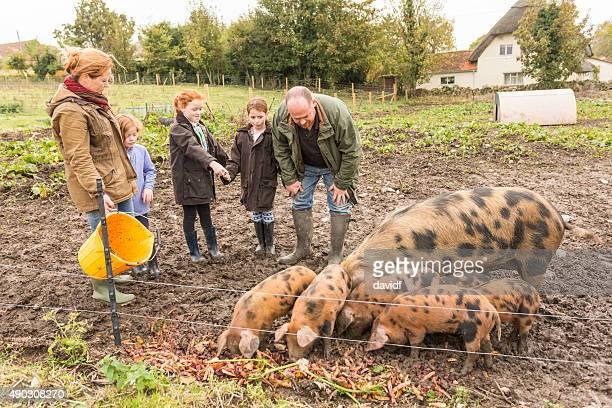 Farming Family Feeding Pigs on an Organic Farm