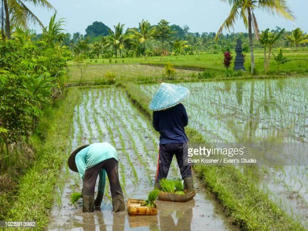 farming & gardening - paisajes de filipinas fotografías e imágenes de stock