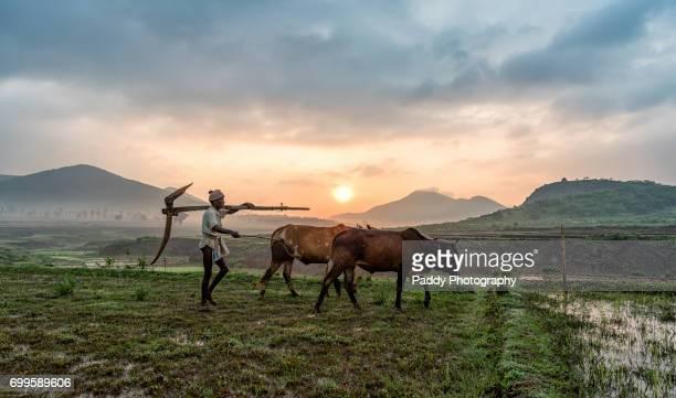 farming in fields - アンドラプラデシュ州 ストックフォトと画像