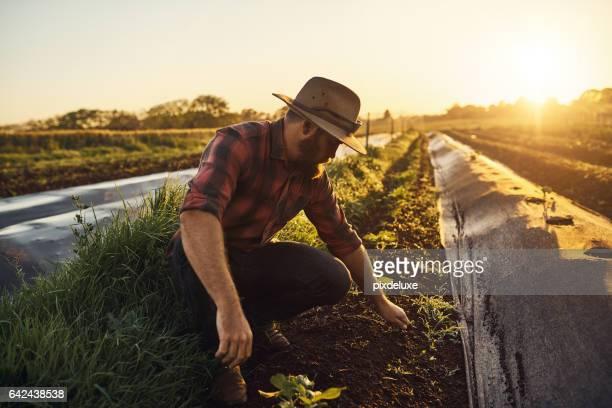 landwirtschaft ist die berufung der optimisten - landwirtschaftliche tätigkeit stock-fotos und bilder