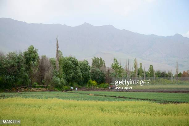 farming near halabja in northern iraq - halabja stock pictures, royalty-free photos & images
