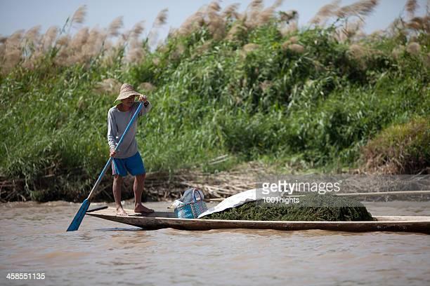 La agricultura en lago Inle, Myanmar