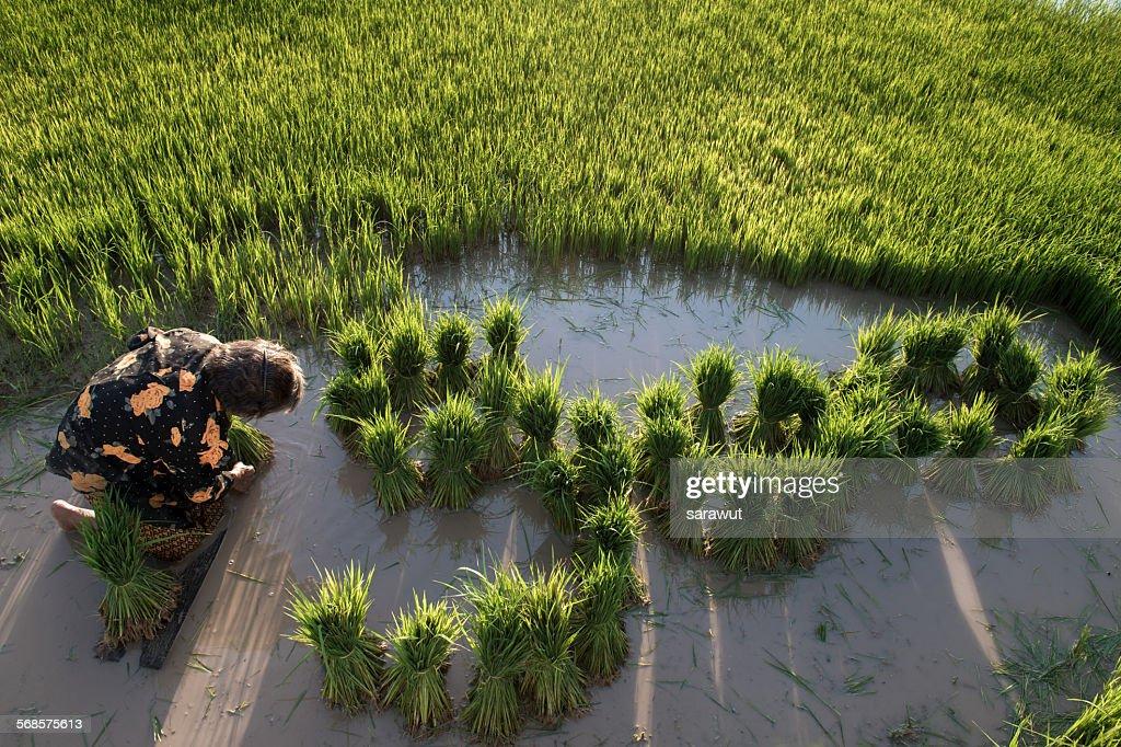 Farming : Stock Photo