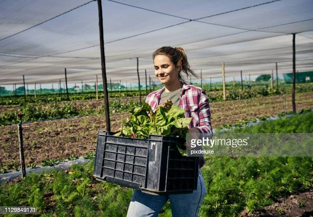 farming quality organic crops - agricultural occupation stock pictures, royalty-free photos & images