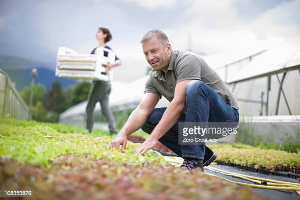 Farming vegetables and fruits