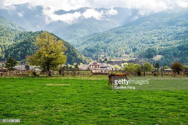 farmland in bumthang, bhutan - caroline pang stock pictures, royalty-free photos & images