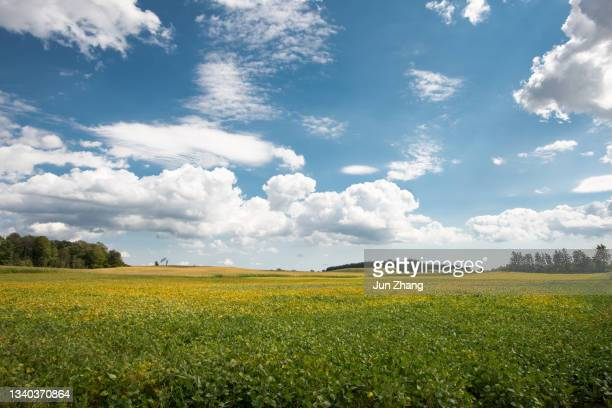 farmland in canada: vast soya bean field in early autumn under cloudy blue sky - tariff stock pictures, royalty-free photos & images