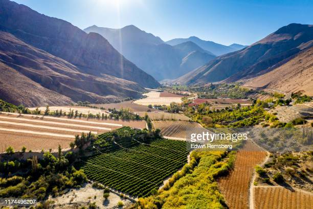 farmland in the elqui valley - chile stock pictures, royalty-free photos & images