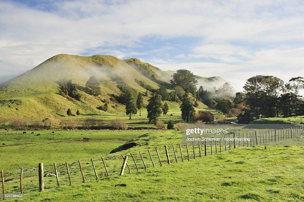 Farmland, near Matawai, Gisborne, North Island, New Zealand, Pacific : Stock Photo