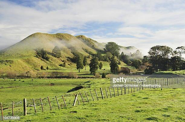 farmland, near matawai, gisborne, north island, new zealand, pacific - gisborne stock photos and pictures