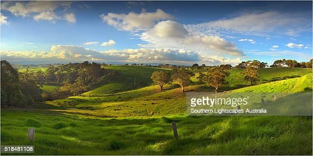 farmland near toora, south gippsland, victoria, australia. - south australia stock pictures, royalty-free photos & images