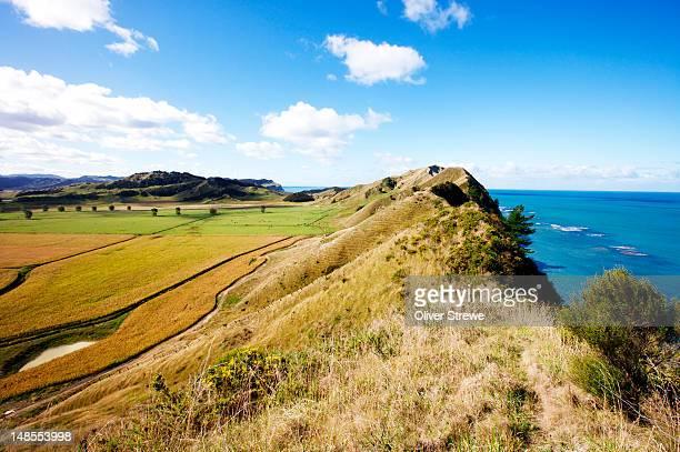 farmland on coast. - gisborne stock photos and pictures