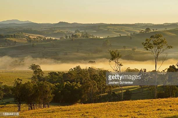 Farmland on foggy morning, Atherton Tableland