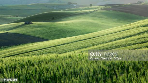farmland - molise foto e immagini stock