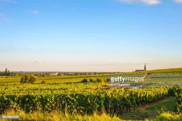 Farmland with rows of vines in Alsace, France