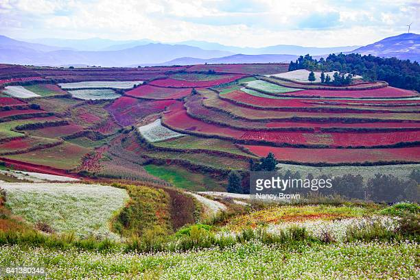 Farmlands in Kunming China know for the Red Earth.