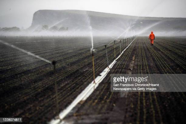 Farmworker working for Scott Seus out at dawn checking sprinkler operation on his farm in the Klamath Basin outside Tulelake, Calif., on Monday, May...