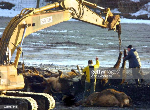 Farmworkers adjusts carcasses lifted onto a bed of coal and straw to be incinerated in the fields of Netherside farm in Lockerbie some 120 km south...