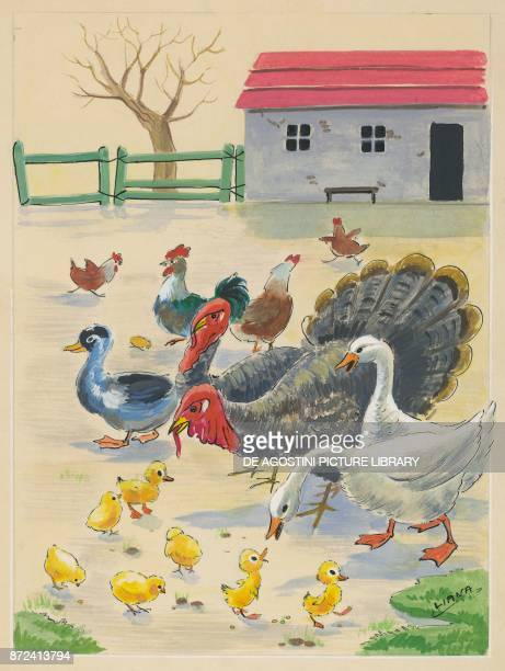 hens roosters geese turkeys ducks chicks children's illustration drawing