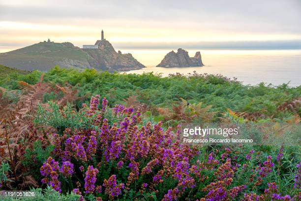 faro cabo vilano (cape vilan lighthouse) at sunset, galicia, spain. - area selvatica foto e immagini stock