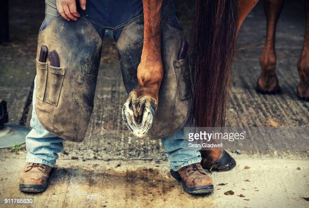 farrier - horseshoe stock pictures, royalty-free photos & images