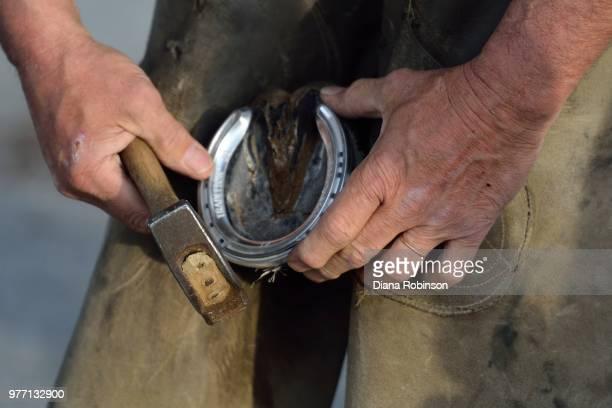 farrier shoeing a horse, churchill downs, kentucky - hufeisen stock-fotos und bilder