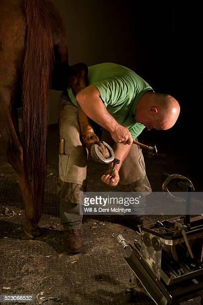 farrier works on horse - hufeisen stock-fotos und bilder