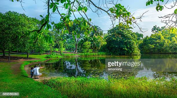 farther and son in lkeside,singapore - botanical garden stock pictures, royalty-free photos & images