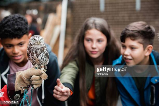 fascinated by the little owl - zoo stock pictures, royalty-free photos & images