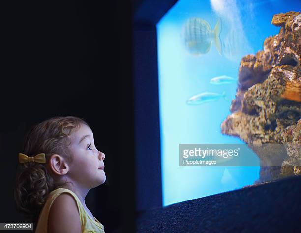 Fascinated by the sea life