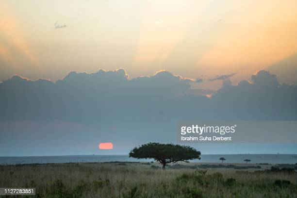A Fascinating Photograph of The Landscape With a Big Tree In The Middle of The Plain Grassland