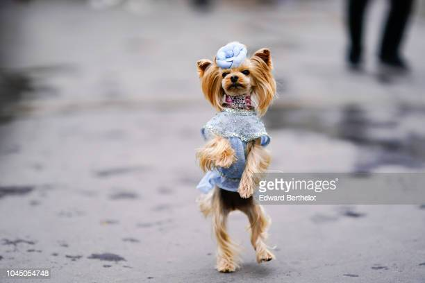 Fashion dog Little Lola Sunshine is seen outside Chanel during Paris Fashion Week Womenswear Spring/Summer 2019 on October 2 2018 in Paris France