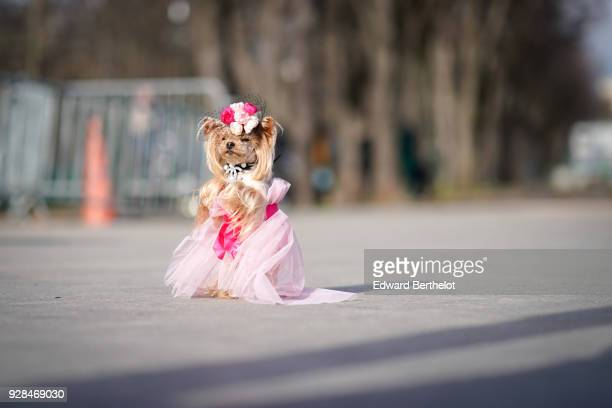 Fashion dog Little Lola Sunshine wears a pink lace dress outside Chanel during Paris Fashion Week Womenswear Fall/Winter 2018/2019 on March 6 2018 in...