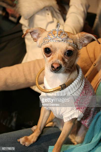 Fashion Dog Lucy Anne poses for photos in the lobby of the main tent during Olympus Fashion Week Fall 2005 at Bryant Park February 10, 2005 in New...