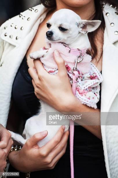 meninas da moda na rua com chihuahua - poodle - fotografias e filmes do acervo