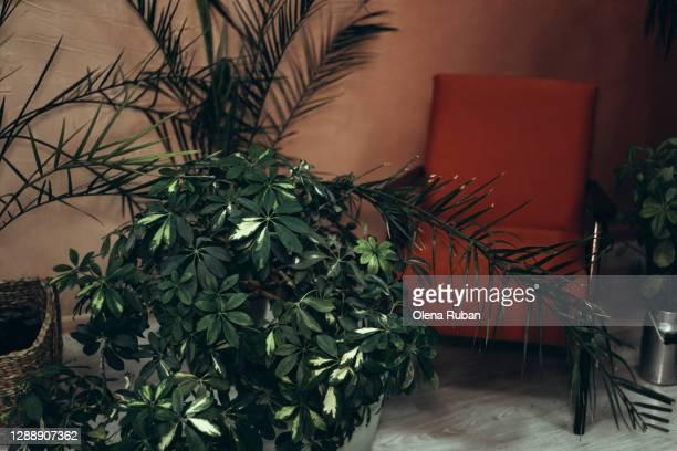 fashionable terracotta armchair and many different plants around it - wohngebäude innenansicht stock-fotos und bilder