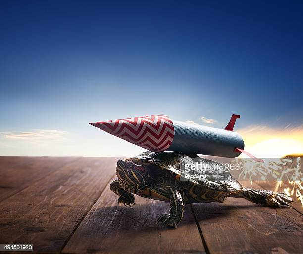 fast hero turtle with rocket propulsion on blue sky - funny cartoon stock photos and pictures