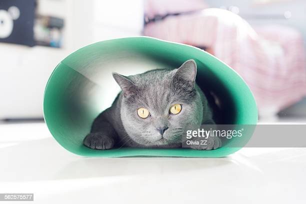 Fat cat in the tunnel