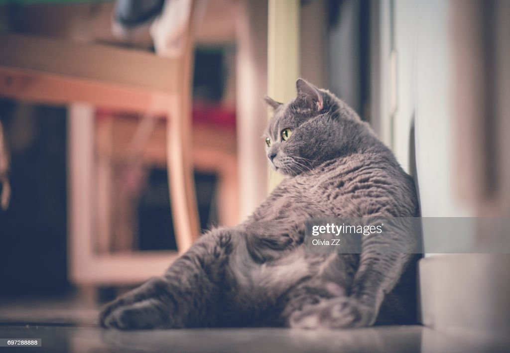 A fat cat leaning against wall : Stock Photo