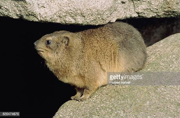 Fat Cliff Sleeper