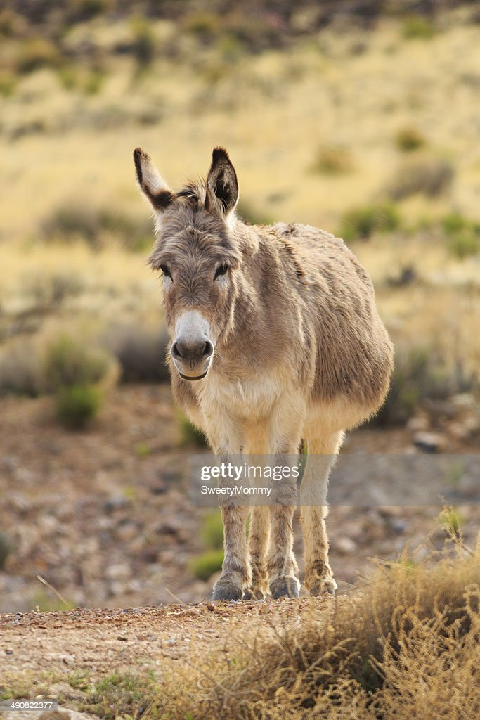 fat donkey vertical stock photo getty images