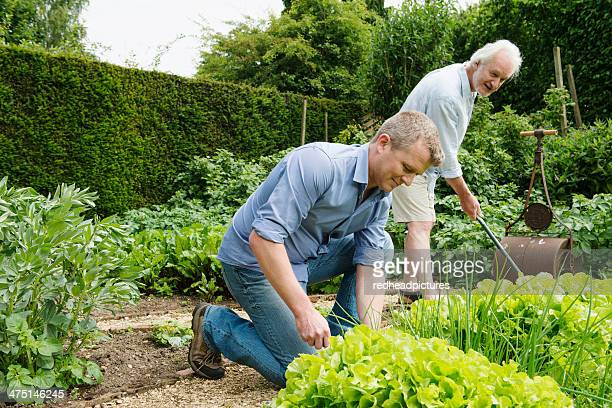 Father and adult son gardening