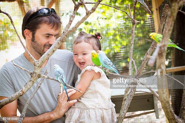 Father and baby daughter looking at budgerigar parakeets at zoo