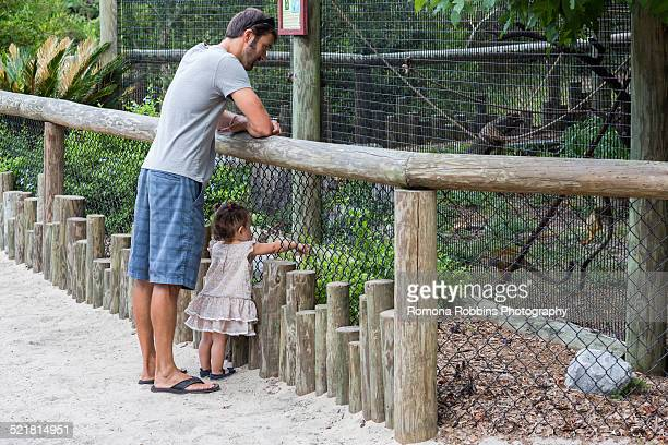 Father and baby daughter watching monkeys at zoo