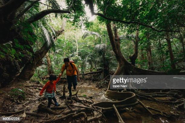 Father and child hiking in jungle of Iriomote, Okinawa, Japan