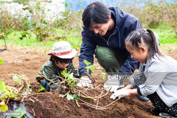 father and children digging crops - agronomist stock pictures, royalty-free photos & images