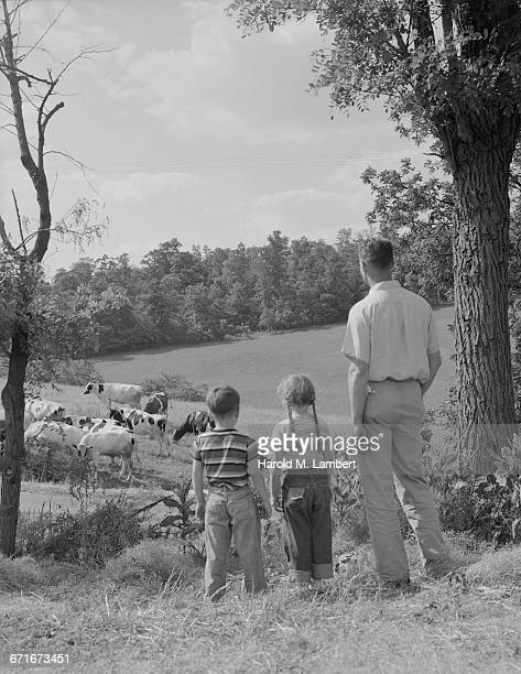 father and children looking at cattle  - {{ collectponotification.cta }} foto e immagini stock